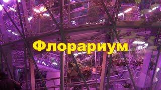 Смотреть видео Интересные места в Москве Флолариум в парке Зарядье онлайн