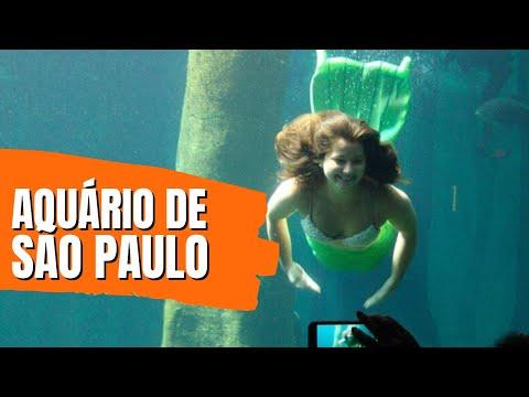 Conheça as novas atrações do Aquário de SP 2016/2017