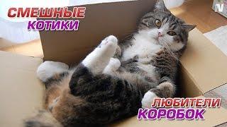 Как же коты любят коробки!