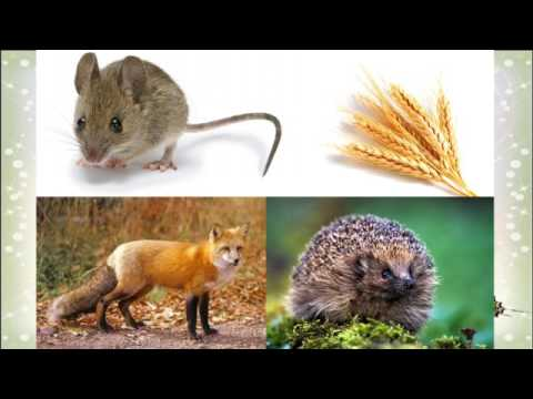Поділ тварин за способом живлення. Ланцюги живлення