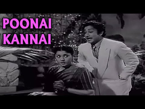 Poonai Kannai Full Song | ராஜ ராணி | Raja Rani Tamil Movie Song | Old Tamil Song | Sivaji | Padmini
