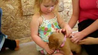 Crystal Dove's New Family! Dogue De Bordeaux Pup