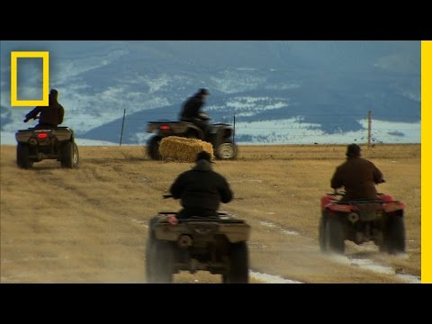 American Colony: Meet the Hutterites - Four Wheeler Race