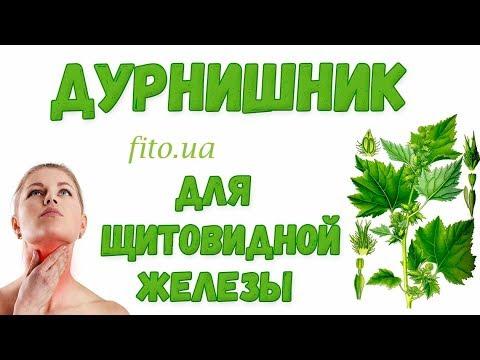 Дурнишник трава: польза, применение, противопоказания, цена | fito аптека