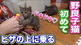 野良猫 子猫 膝の上 【小さな野良子猫との初めての触れ合いと膝の上に乗ってくれた日】 Cute kitten Japanese traditional house