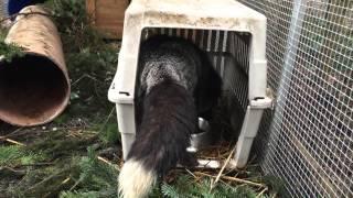 Fuchs Silberfuchs Mogli Boxentraining Transportbox