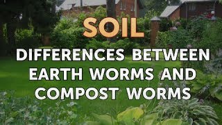 Differences Between Earth Worms and Compost Worms