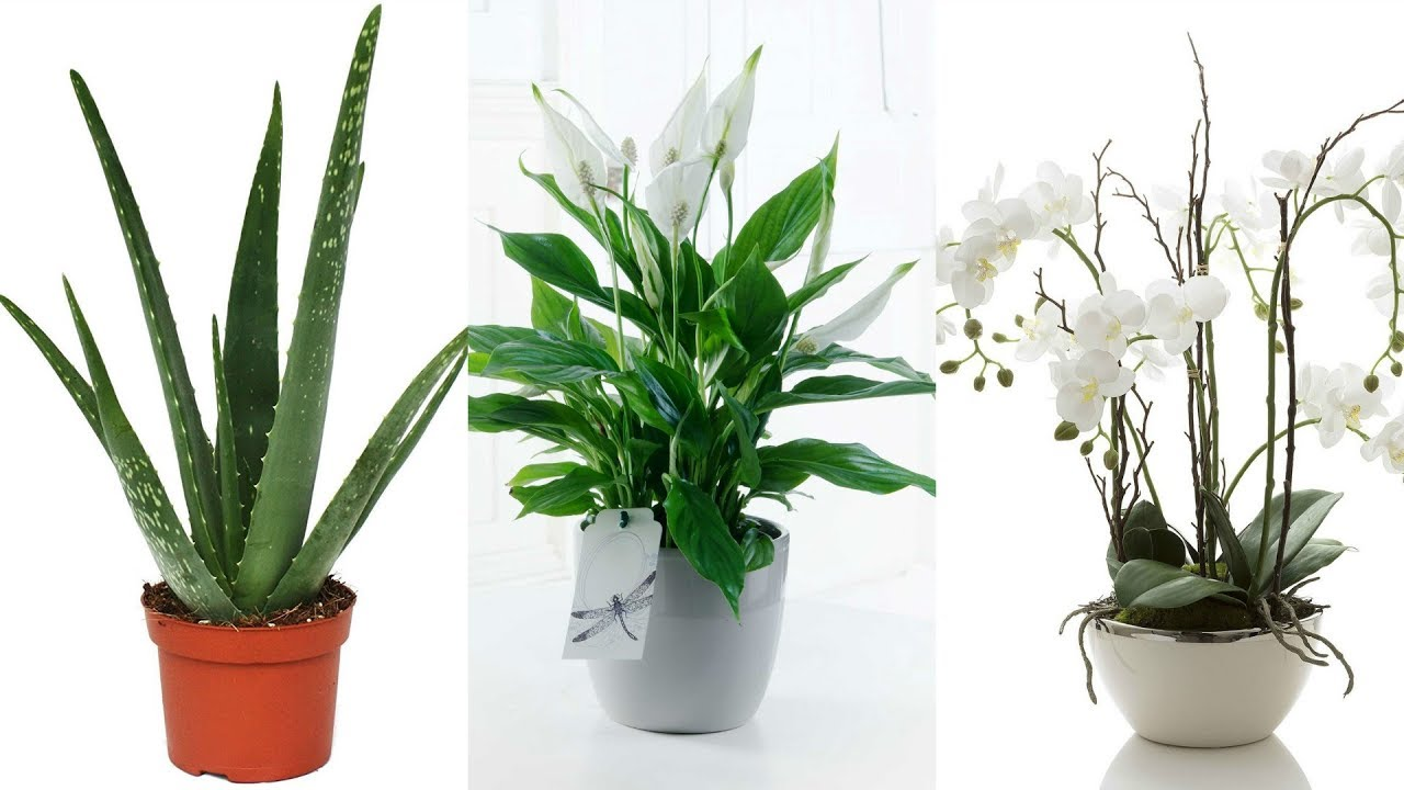 top 5 bathroom plants and why you should have them - Bathroom Plants