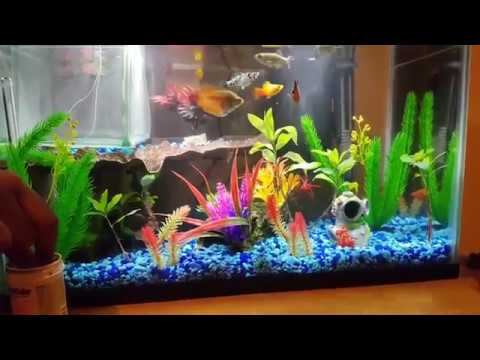 Most Beautiful 10 Gallon Tank Ever Must See Youtube