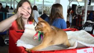 Всемирная выставка кошек. Минск. Беларусь. 14-15.06.2014