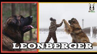 LEONBERGER o cão mais versátil de todos