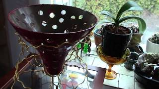 Phalaenopsis DIY orchid pot finished, painting finished, a new projectand orchid updates