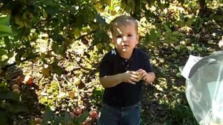 Larriland Farm Excursion