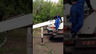 В карагандинском дворе спилили под корень 20 деревьев