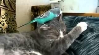 Улетный прикол про кота и попугая  Смотреть всем!!!