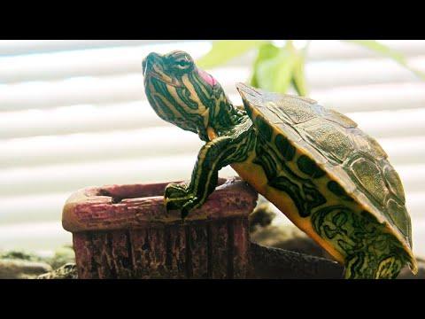 Turtle Tank 29 Gallon Setup For Red-Eared Slider