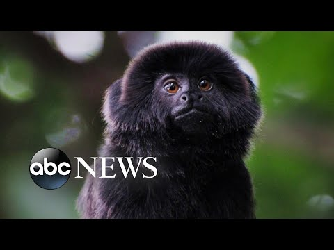Rare monkey stolen from Palm Beach Zoo found safe
