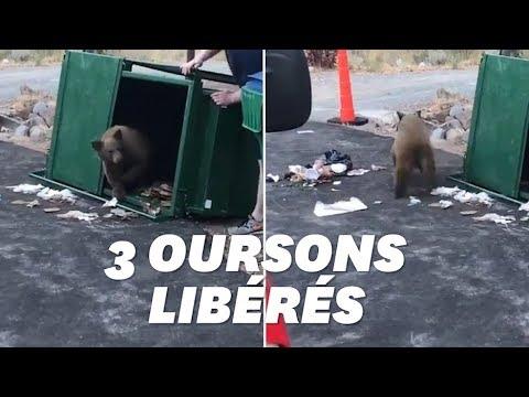 À Coachella, une femme filmée jetant des chiots à la poubelle