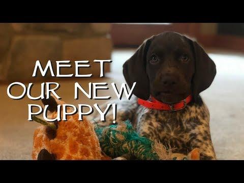 Introduce Your New Puppy To Your House  Upland Bird Dog Training