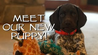 Introduce Your New Puppy To Your House - Gun Dog Training