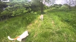 Dogs Trust Newbury - Annie And Archie