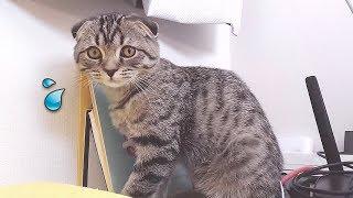 컴퓨터 꺼버린 고양이를 혼냈더니..