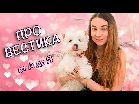 МОЙ ВЕСТ ХАЙЛЕНД УАЙТ ТЕРЬЕР/ ТАМАРА ГРИН