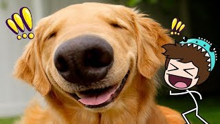 FUN DOGS AND KITTENS *the most kawaii* 😍 MINECRAFT ROLEPLAY + ROBLOX PET RANCH