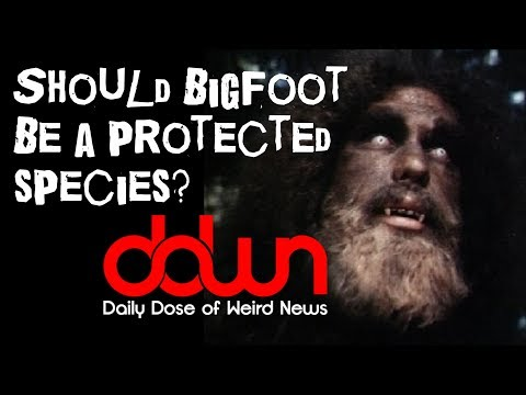 Should Bigfoot become a protected species? * And MORE in this DAILY DOSE OF WEIRD NEWS! #DDWN