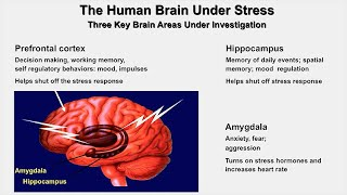The Resilient Brain: Epigenetics Stress and Lifecourse   Early Life Deprivation Bruce McEwen thumbnail