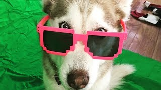 Better than Bieber - I Don't Care [Husky Edition]