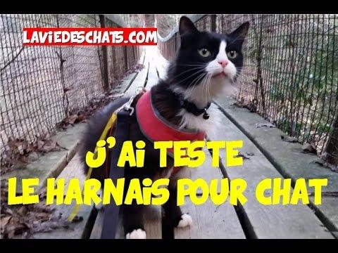 J'ai Testé Le Harnais Pour Chat 🐱 (ou Laisse Pour Chat)