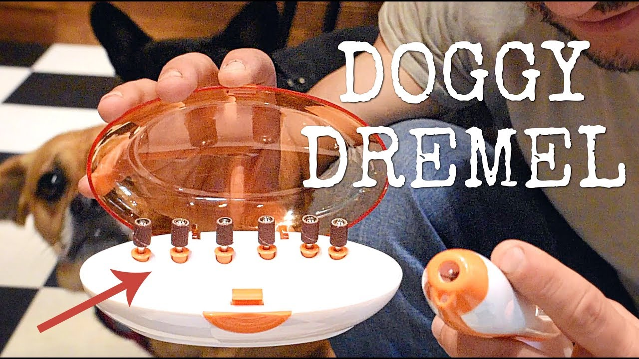 DOGGY DREMEL - GRINDING OUR PARALYZED PUGGLE\'S NAILS! - YouTube