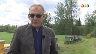 Vidzemes TV: Mājā un sētā (08.06.2017.)