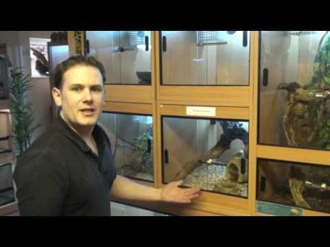 Monitor Lizards With Phil - Croc Monitor, B&W Tegu, Ackie Or Spiny Tailed Monitor and a Golden Tegu