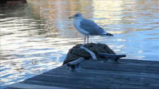 """Move On"" - Connor Garvey - Where Ocean Meets Land"