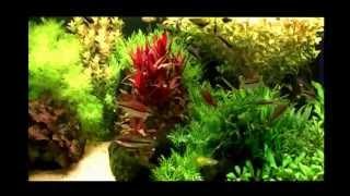 Голландские аквариумы