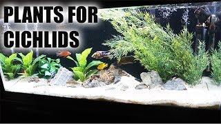 Elite Collection Freshwater Live Aquarium Plants