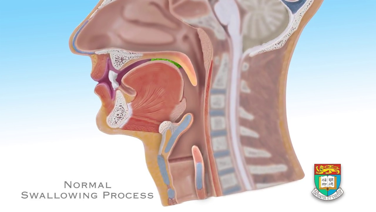 Normal swallowing process - YouTube