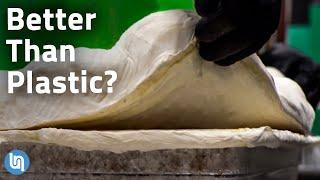 Is Mycelium Fungus the Plastic of the Future?
