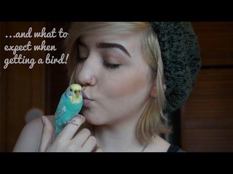 Meet My (5) Birds!!! | Brenna Neal