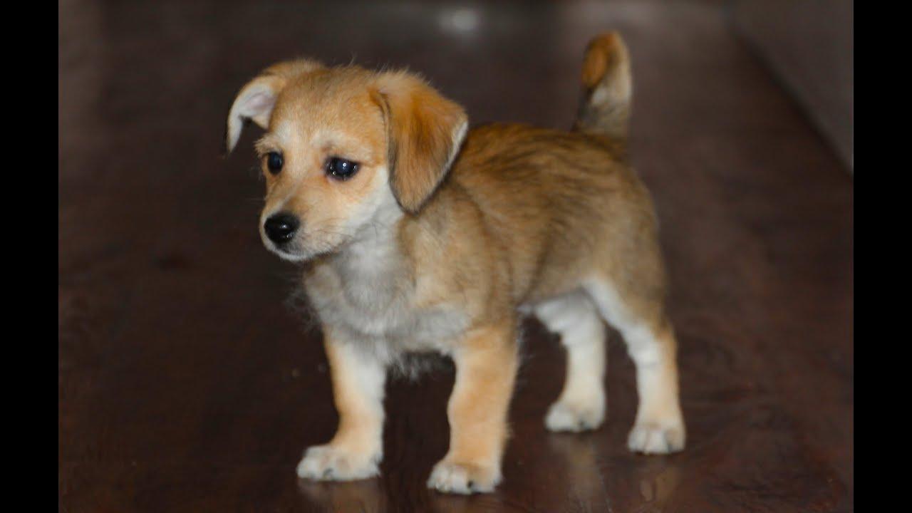 How To Litter Potty Train A Puppy Dog Funnydog Tv