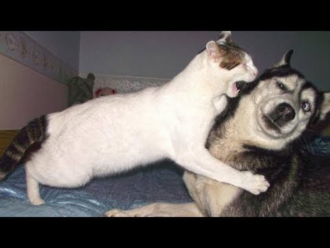 NOBODY can HANDLE this FUNNY DOG COMPILATION - Funny DOGS compilation