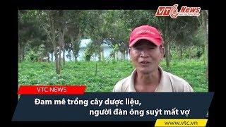 Đam mê trồng cây dược liệu, người đàn ông suýt mất vợ