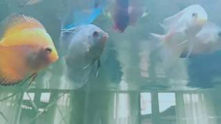 Fish Feeding   freeze dried worms buffet !