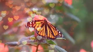 Moving butterfly background/into/gifs