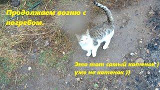 Погреб - продолжаем ремонт, подготовка к заливке бетона / Спасенный котенок - уже не котенок ))