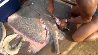 Pescaria embarcado em Fortaleza