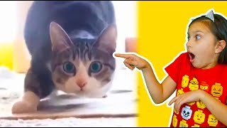 КОТЫ ПРЫГУНЫ! ЛУЧШИЙ НЕ ЗАСМЕЙСЯ ЧЕЛЛЕНДЖ с КОТАМИ! Funny Cats Попробуй не засмеяться Валеришка