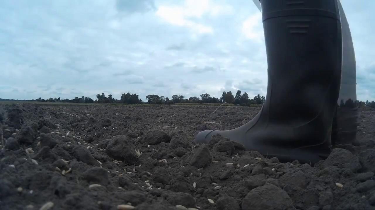 2014 Участок 5 Уборка зерновых Комбайн Claas Consul - YouTube
